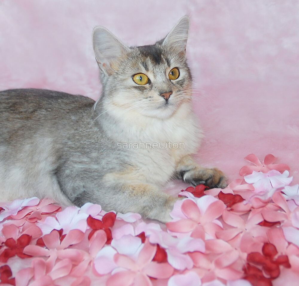 Flower cat by sarahnewton