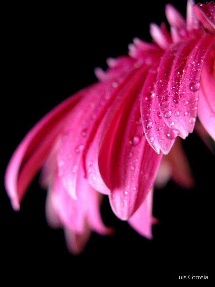 Pink Droplets by Luis Correia