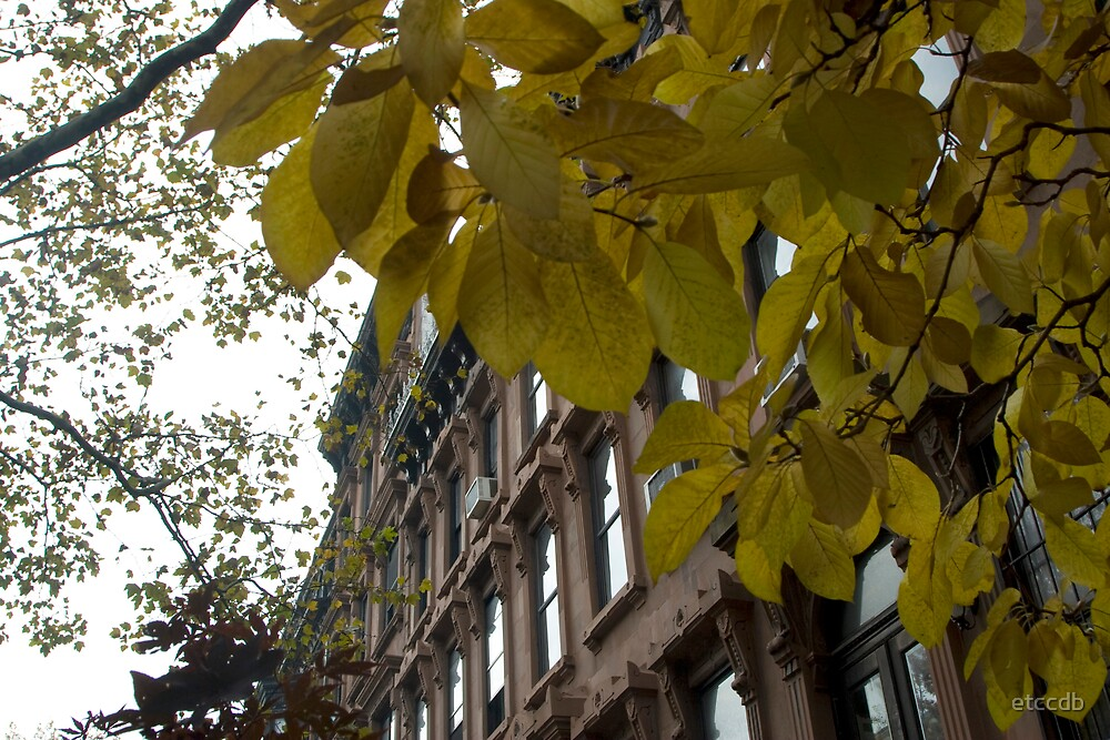 brownstone fall colors by etccdb