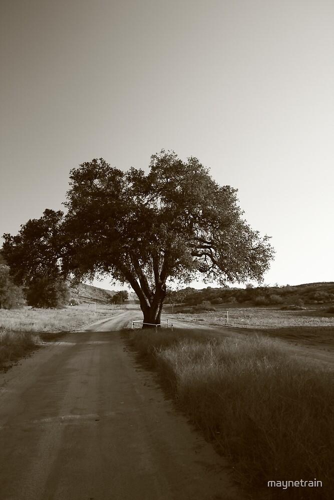Old tree by maynetrain