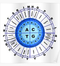 DNA, Genetic Code, Circle, Gene, Codon, Amino Acid, Poster