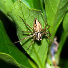 Hairy Spider by Warren Taylor