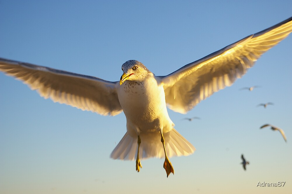 You Go, Gull! by Adrena87