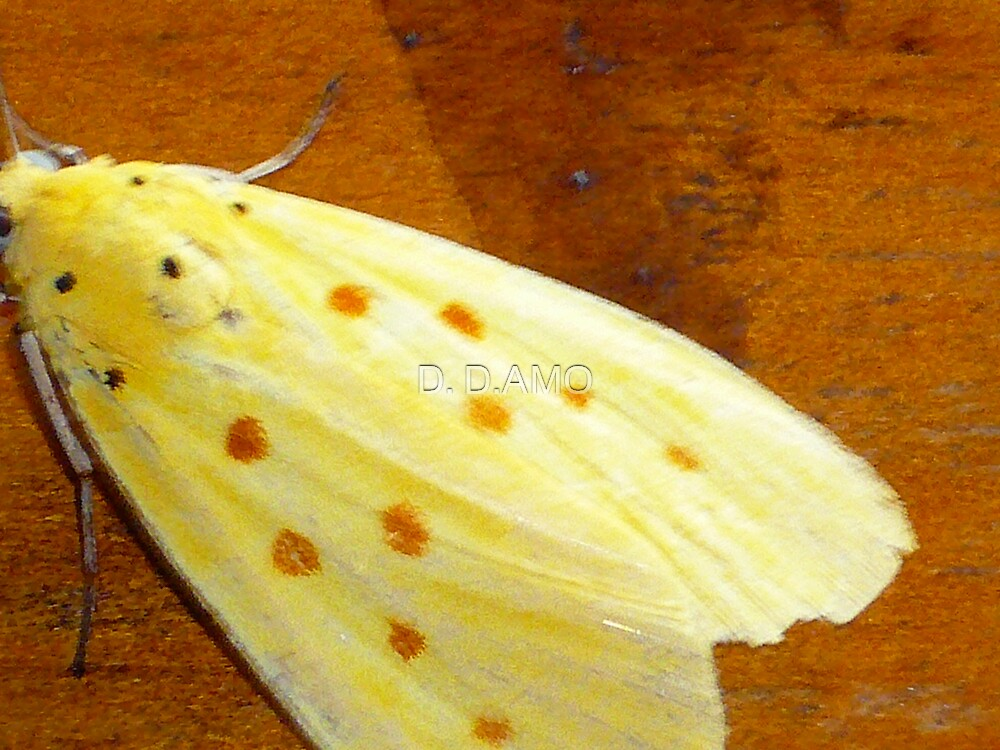 orange polka-dotted moth by D. D.AMO