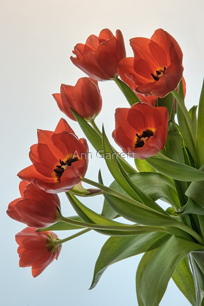 Vase of Tulips by Ann Garrett