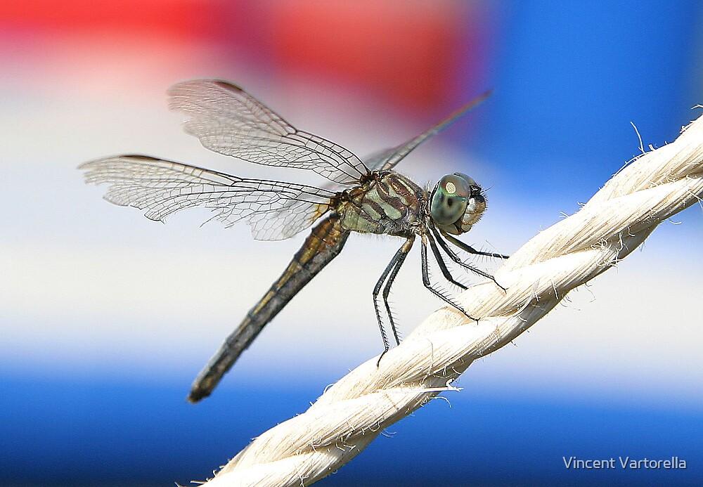 Patriotic Dragon Fly by Vincent Vartorella