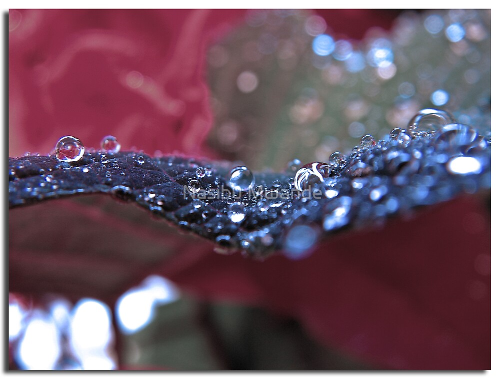 A line of Drops by Nasibu Mwande