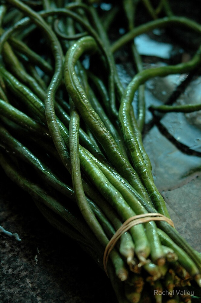 Chinese Long Beans by Rachel Valley