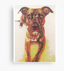 Roxy the Pit Bull Canvas Print