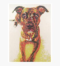 Roxy the Pit Bull Photographic Print