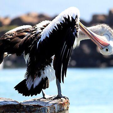 Pelican Grooming by Evita