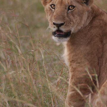 Lion by SteveBulford