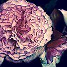 Begonian Rhapsody by Linda Bianic