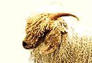 Schlechtes Haar Tag - Angora-Ziege von Evita