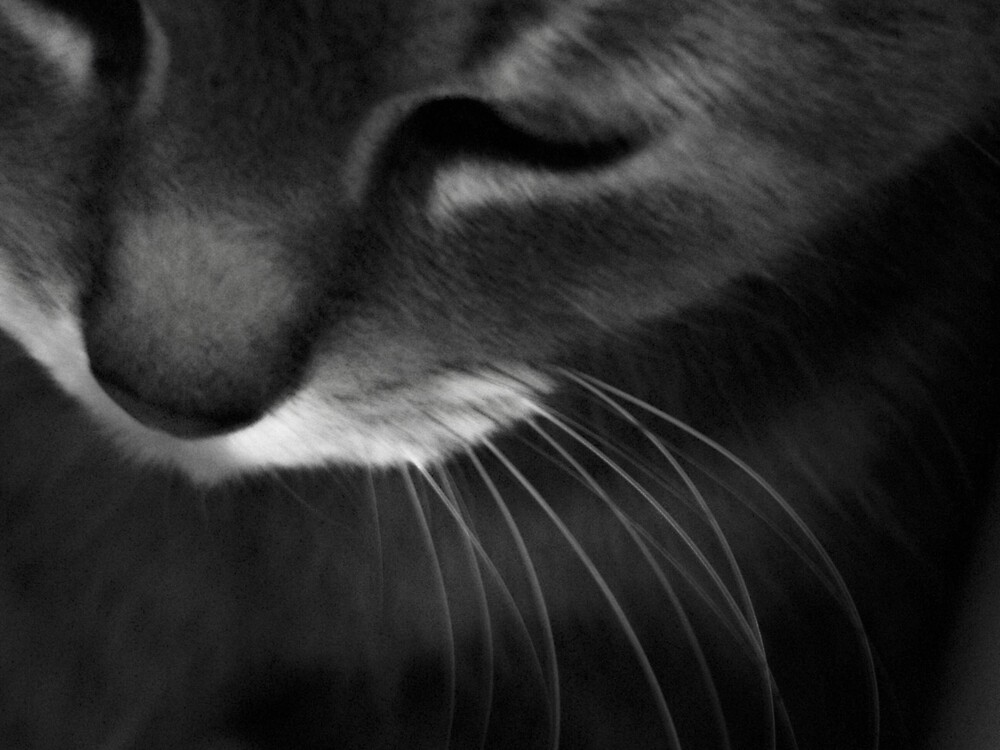 whiskers by M.  Photography