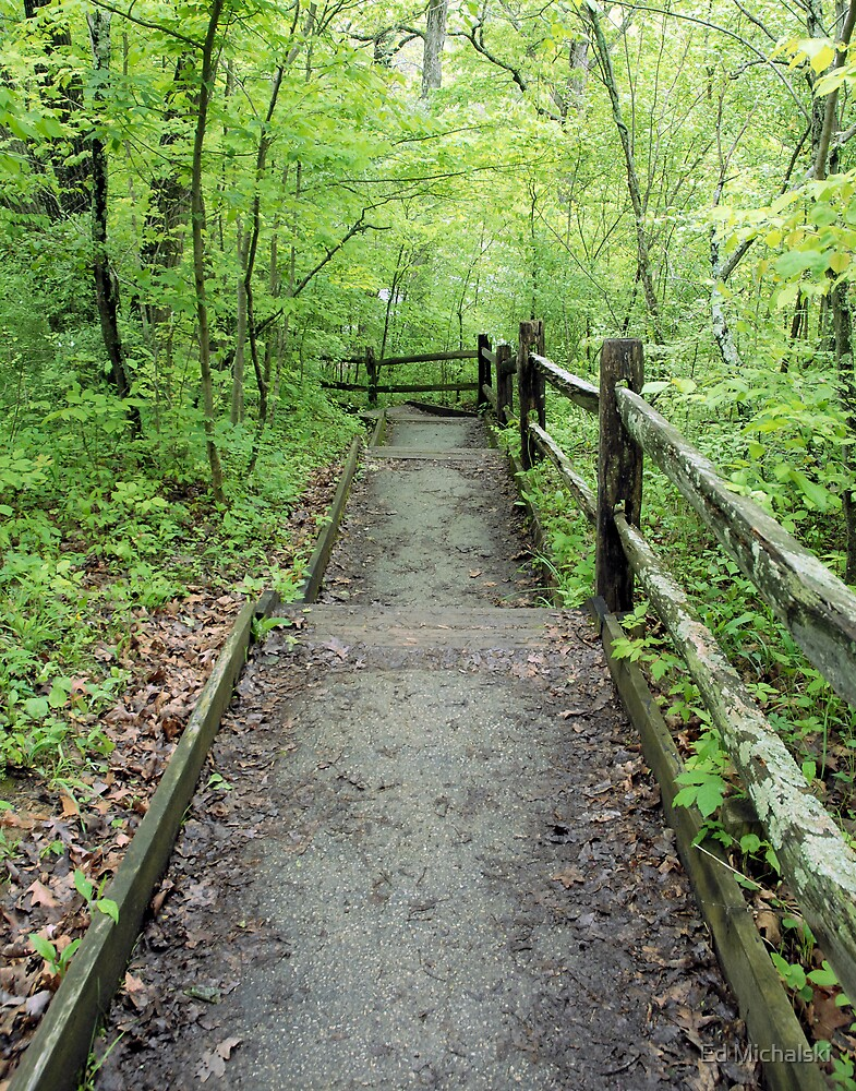 The path by Ed Michalski