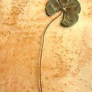 Four Leaf Clover  by Roz McQuillan