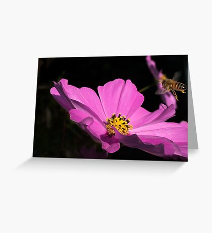 Bee coming into land  Greeting Card