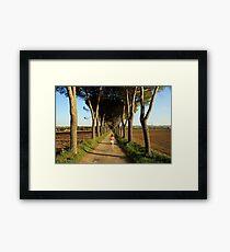 Running trees Framed Print