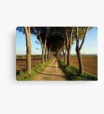 Running trees Canvas Print
