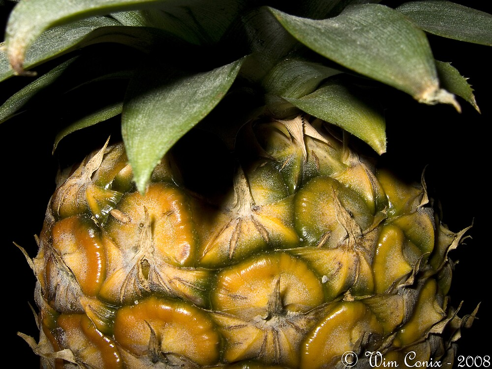 Pineapple... by Wim Conix
