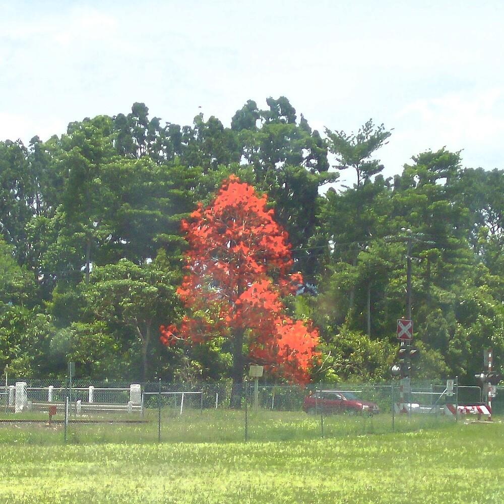 Tree of Fire by footyman