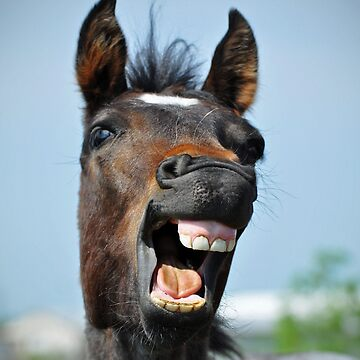 Horse Teeth by venny