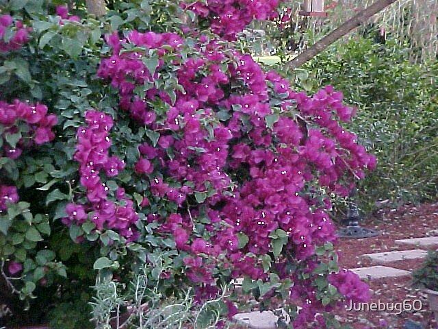 Shades of Purple by Junebug60
