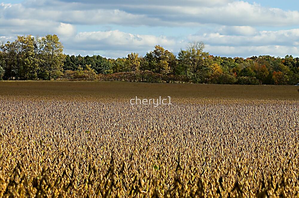 The Corn Field by cherylc1