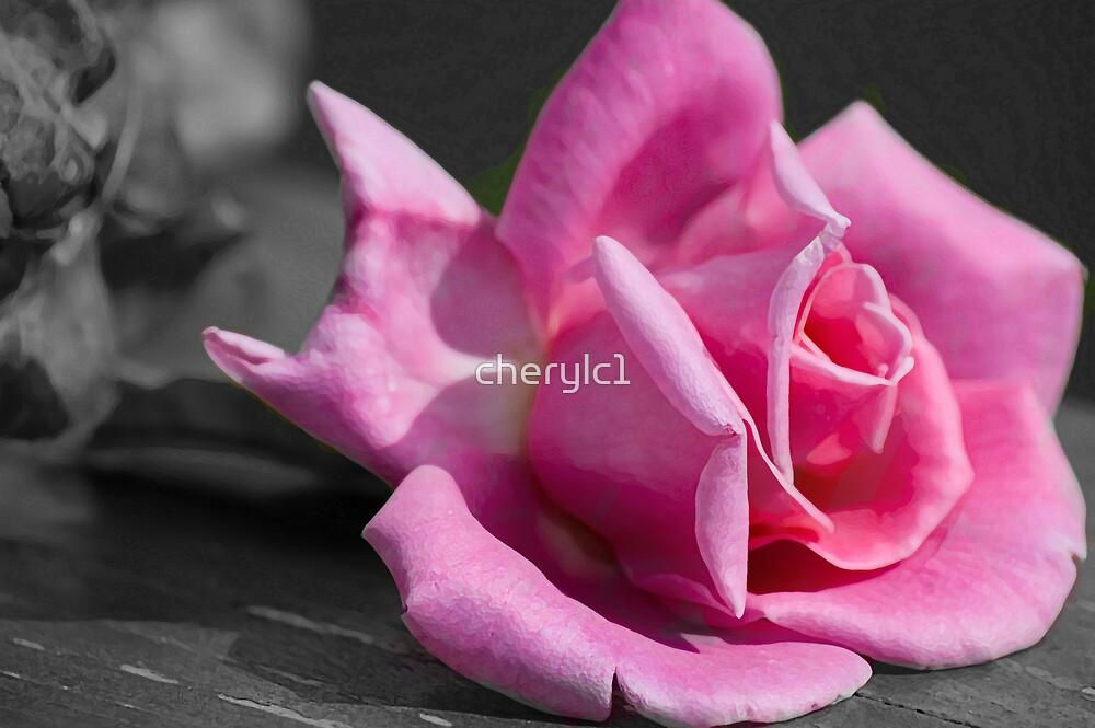 Pretty In Pink by cherylc1