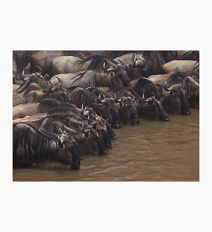 The Watering Hole Photographic Print