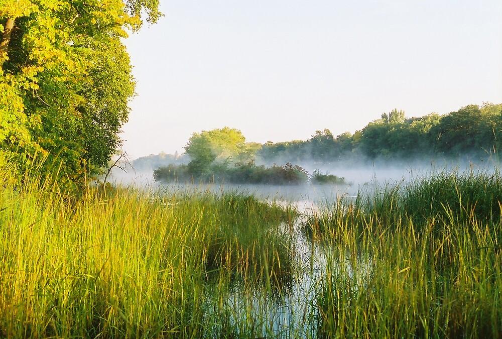 Minnesota Fog by Mark Mcdonough