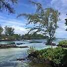 Hilo Hawaii by justineb