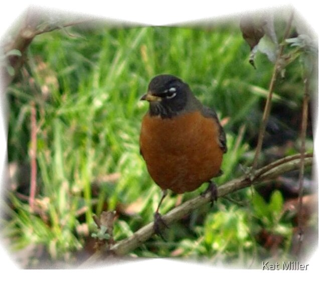 Red Robin Red Robin by Kat Miller