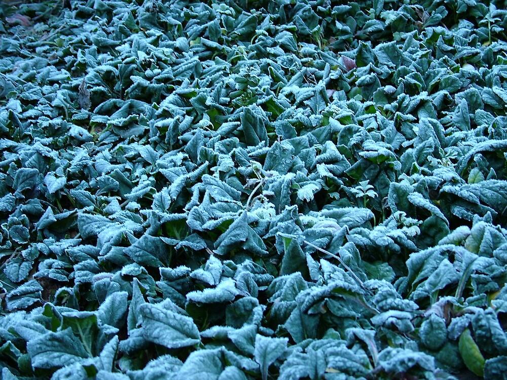 ice on ivy by katejones