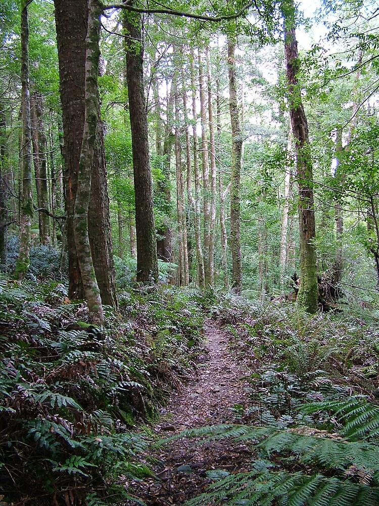 higgs track tasmania by katejones