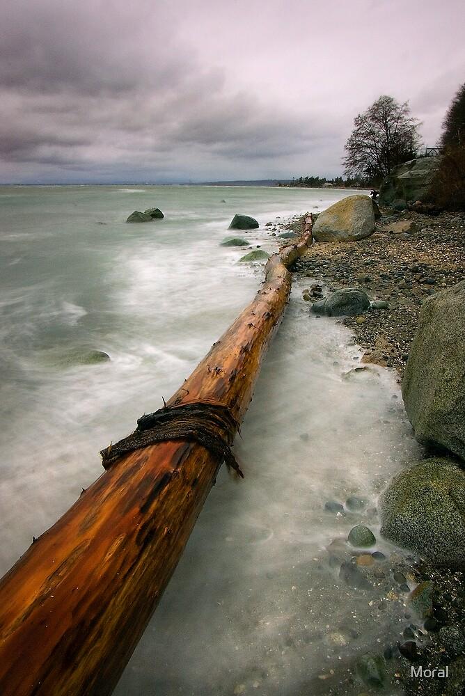 Driftwood by Ryan Watts