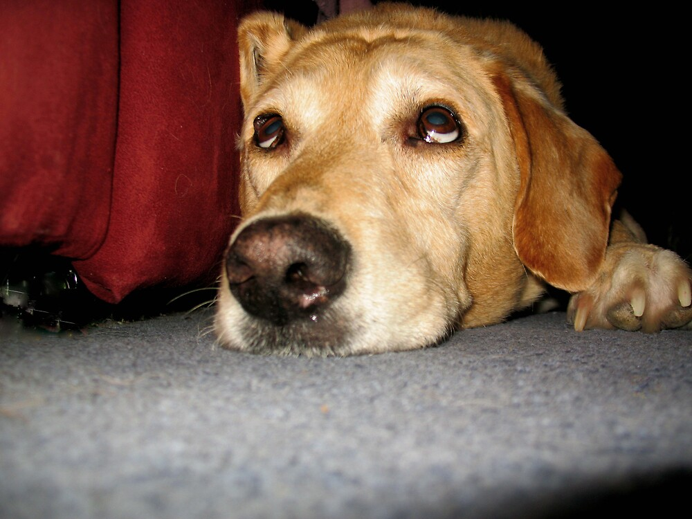 Watching Dog by nikspix
