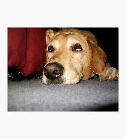 Watching Dog Photographic Print