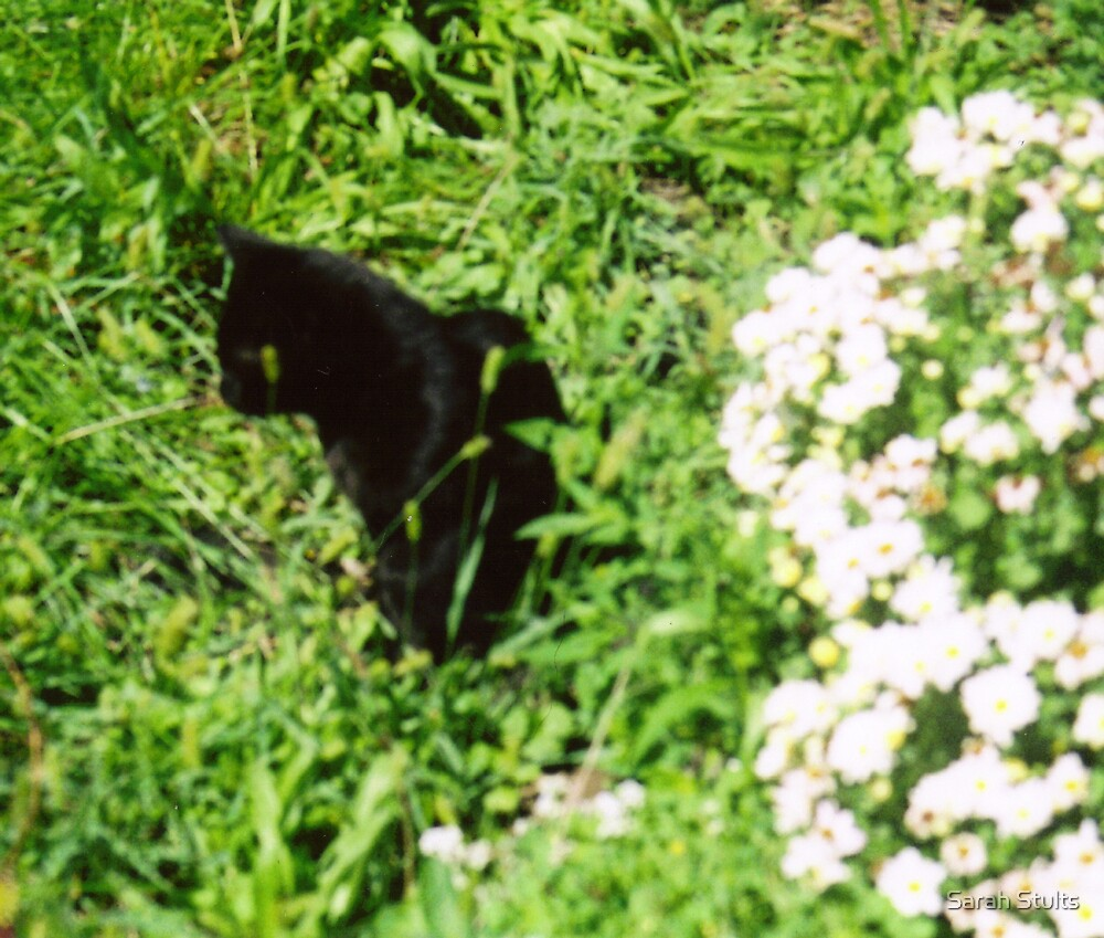 Cat in the Garden  by Sarah Stults