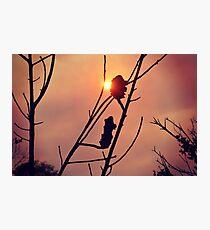 Bushfire Sunset Photographic Print