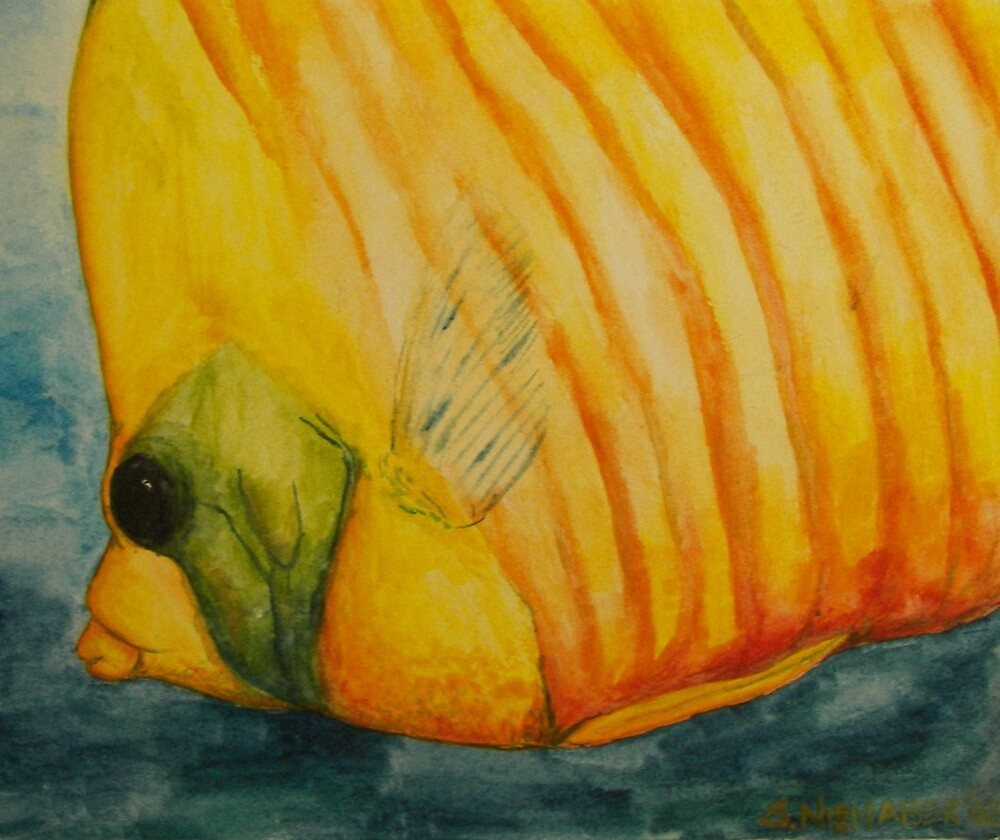 Watercolour fish by Stephanie Nienaber
