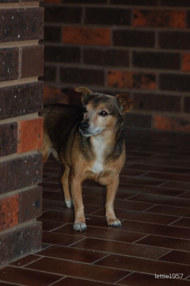 Simmi - Friend's dog  by lettie1957