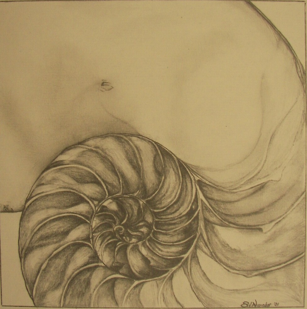 Sections of a shell by Stephanie Nienaber
