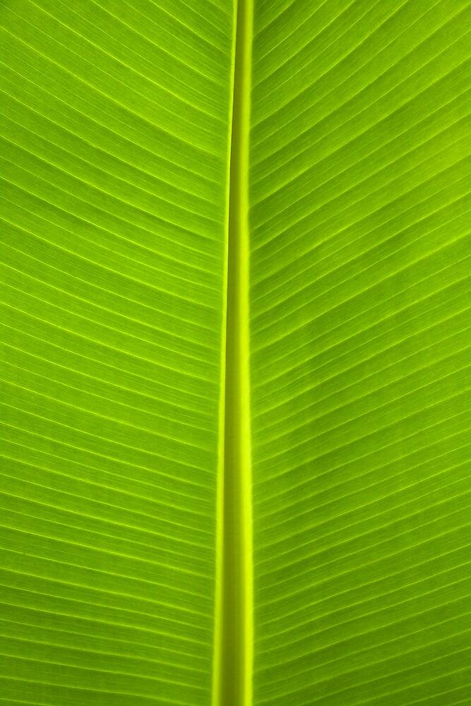 Primal Colors II by Yves Rubin