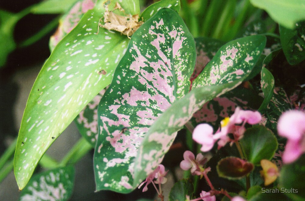 Pink and green  by Sarah Stults