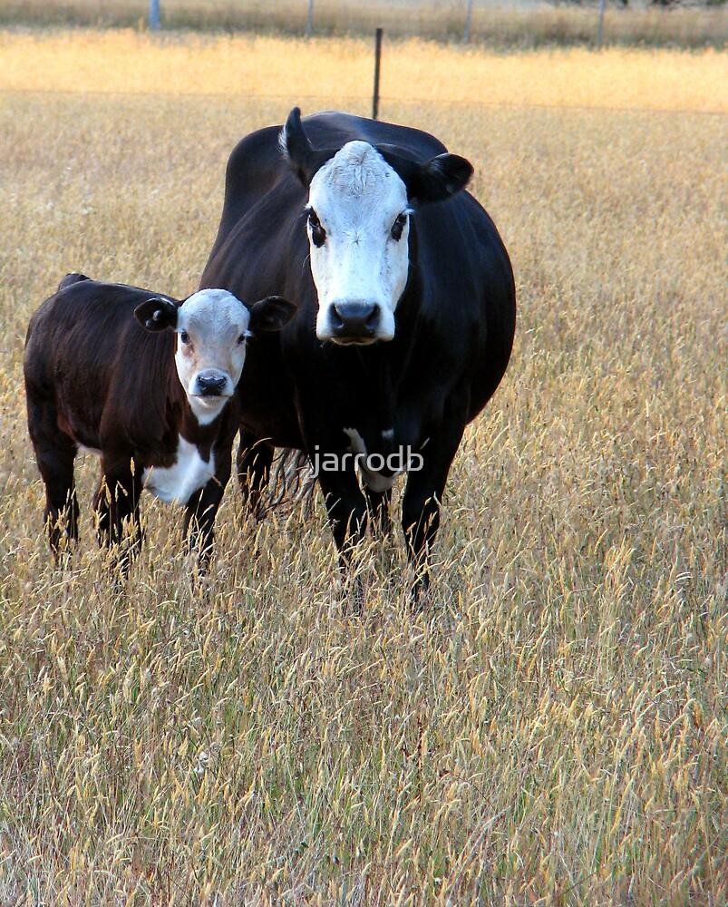 no bull by jarrodb
