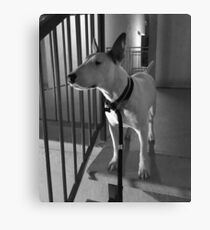 Bull Terrier at Night Canvas Print