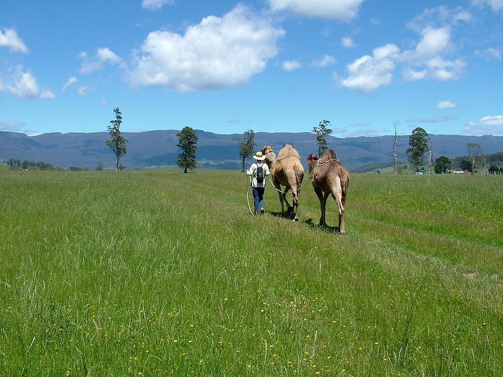 camel treck tasmania by katejones