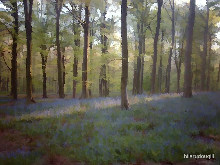 Bluebell wood by hilarydougill